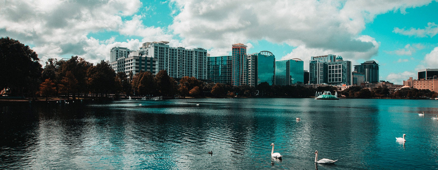 park pond with city view